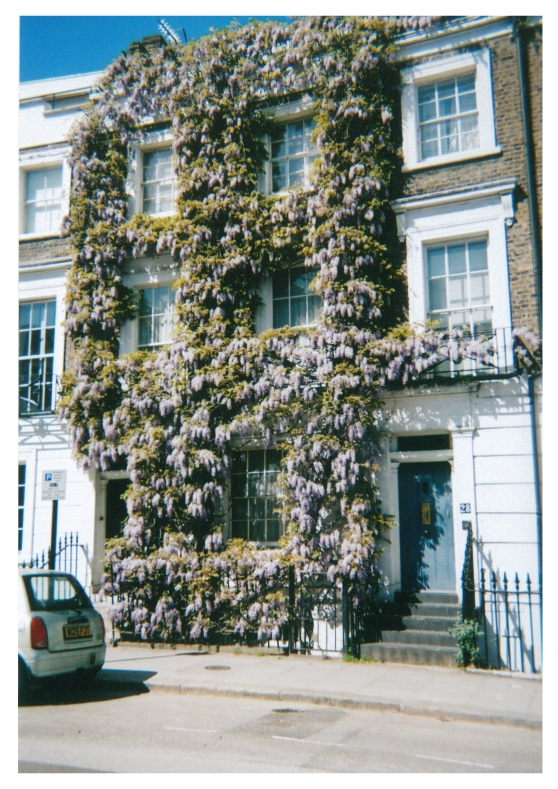 Wisteria-covered house, Camden Town, London